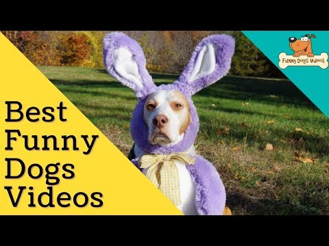 Funniest & Cutiest Dogs Reactions, Bloopers & Fails | Funny Dogs Videos Compilation #18
