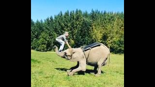 Guy Attempts to Flip Onto Elephant