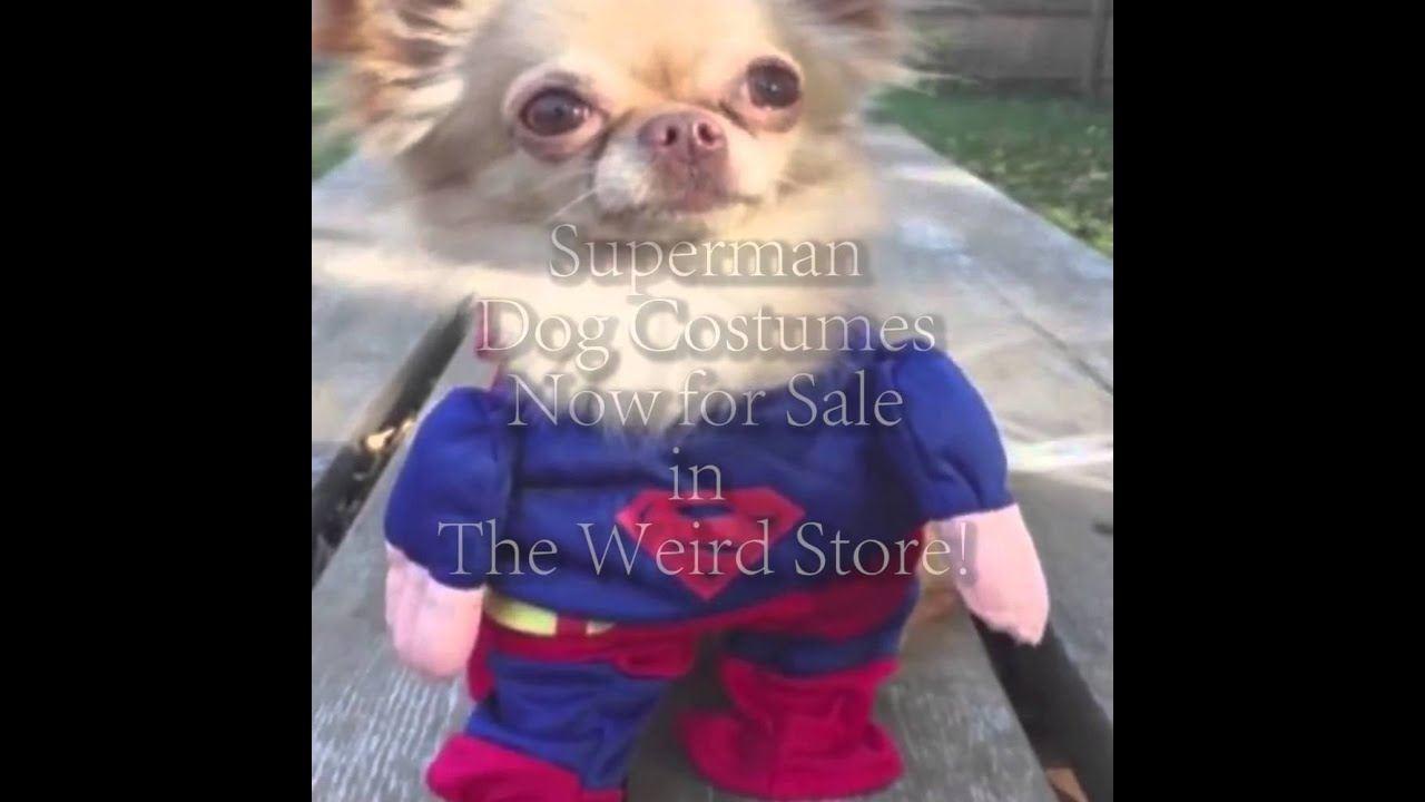 SuperMan Dog Costume Montage