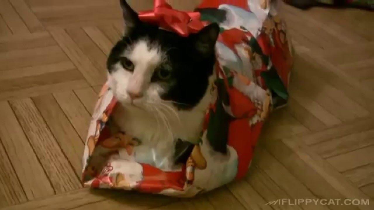 Favori Le chat emballé! - Noël - YouTube TK72