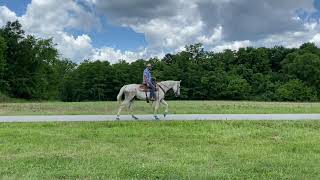 SOLD fast tattooed standardbred for sale, well broke, trail horse, speed racking, speed pacing horse