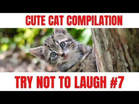 Cute cat compilation try not to laugh #7