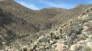 Borrego Springs: Montero palms - Goat canyon