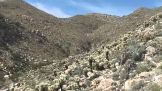Borrego Springs: Montero palms - Goat canyon