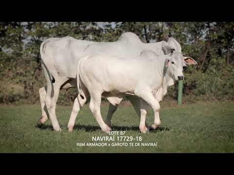 LOTE 087   CSCN 17729