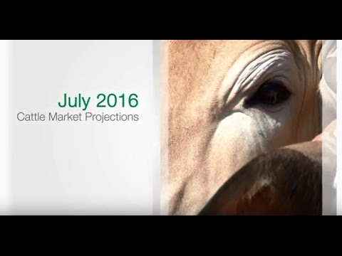 MLA Cattle Industry Projections July 2016