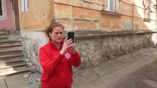Подсчет бездомных животных - инструкция