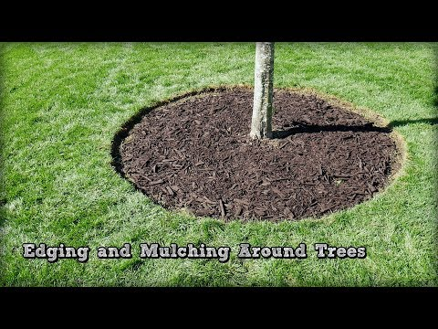 Edging and Mulching Around Trees - How To Redefine An Edge