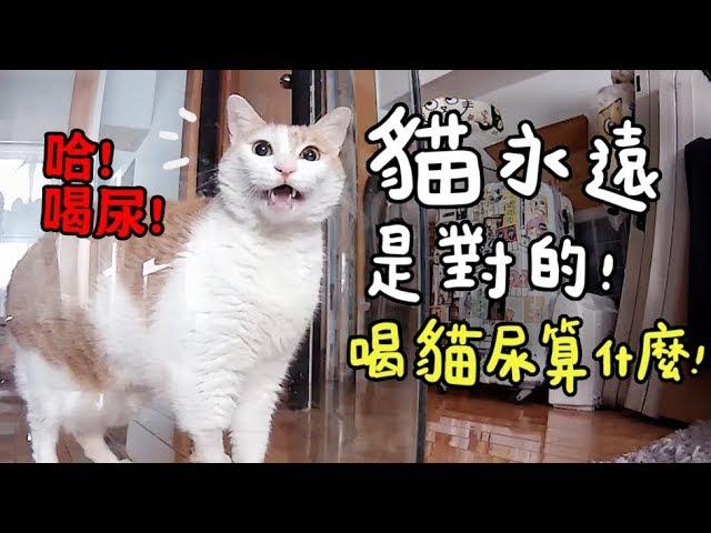 黃阿瑪的後宮生活-貓永遠是對的-喝貓尿算什麼