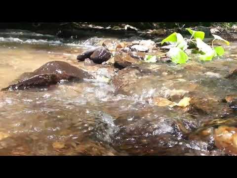 Apa curata de la Pădurea Neagră