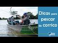 Top Dica - Dicas para pescar de corrico e pegar grandes peixes