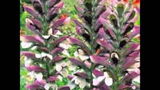 Plantas, flores y vida
