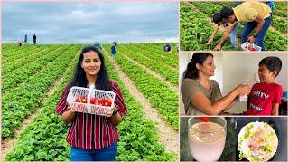 ಕೆನಡಾದಲ್ಲಿ Strawberry ತೋಟ ||First Time ನಾವೇ ಹೋಗಿ ಕೊಯ್ದುತಂದ್ವಿ| Milkshake ಇಷ್ಟಇಲ್ದಿರೋ ಮಕ್ಳು ಇದಾರಾ🙄