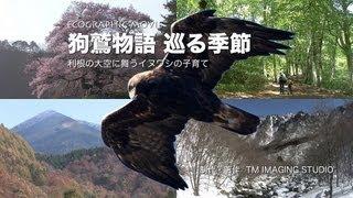 ecographic movie 〜 狗鷲物語 巡る季節(60min)」は、イヌワシの子育...