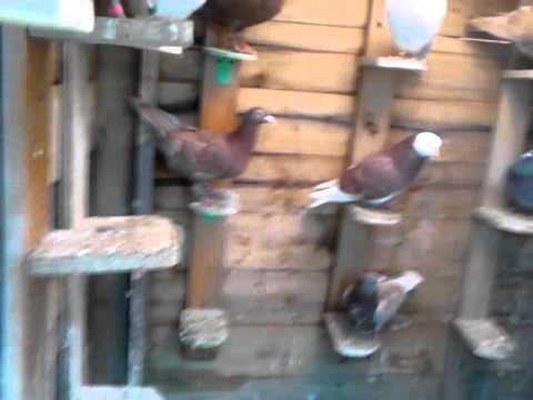 home homemade create pigeon diy youtube clever watch guidecentral a feeder tutorial how bird to