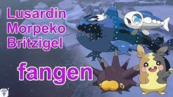 Lusardin, Morpeko, Britzigel fangen | Pokemon Schwert und Schild
