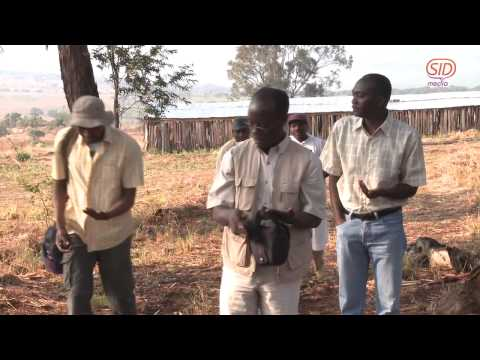 Zázrak padání manny v Africe