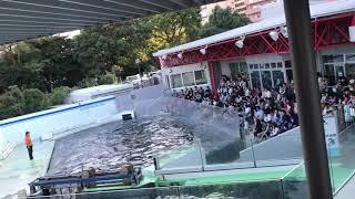 Dolphin Dance   Tokyo Japan