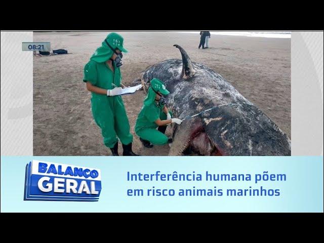 Alerta: Poluição e interferência humana põem em risco animais marinho