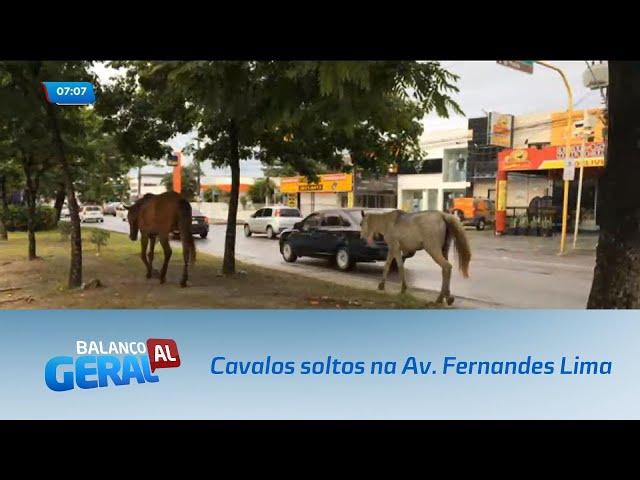 Cavalos são vistos andando livremente pelo canteiro central da Av. Fernandes Lima