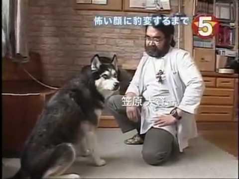 狗狗恐怖的表情