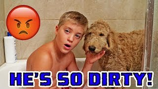 FUNNY PUPPY BATHS & SCARY ROLLER COASTERS