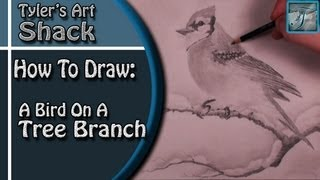 How to Draw a Bird on a Tree Branch