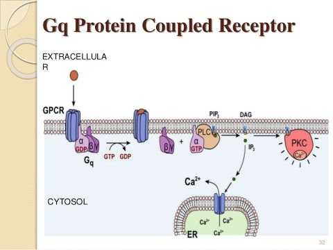 short report on receptor proteins Stability of detergent-solubilized g-protein-coupled receptors and it is well-known that short how do short chain nonionic detergents destabilize g-protein.