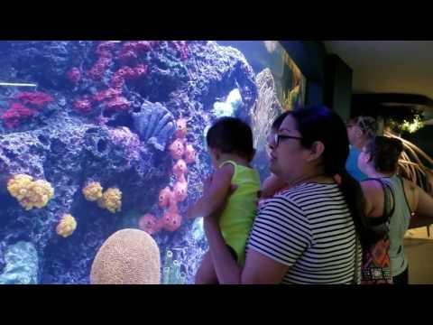 Moody Garden Aquarium 2017.