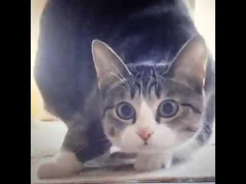 Кот том и негр видео