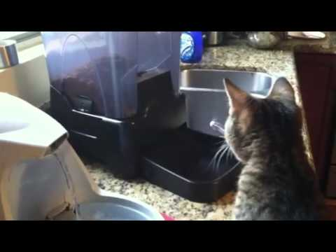 Testing the new automatic cat feeder
