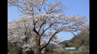 【桜を求めて】東海道本線、養老鉄道、西濃鉄道、樽見鉄道へ