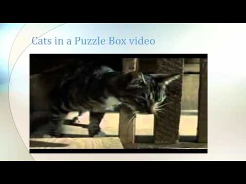 Thorndike: Cats in a Puzzle Box Presentation
