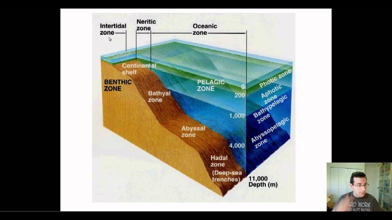 Ocean Zones Lessons Tes Teach – Ocean Zones Worksheet