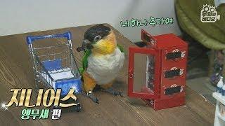 콜라랑 막걸리 카트에 담는 천재 앵무새