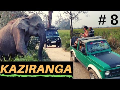 Kaziranga National Park Jungle safari | EP 8 Cultural programme at Orchid,