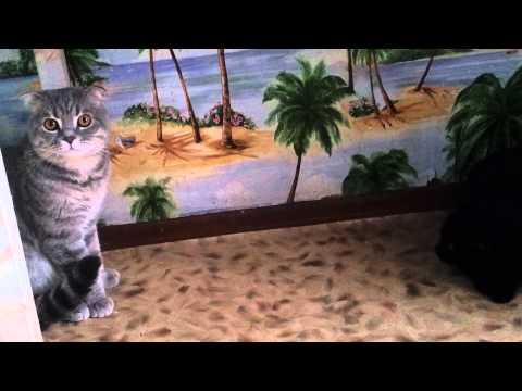 Что делать, если кошка хочет кота, методы успокоения