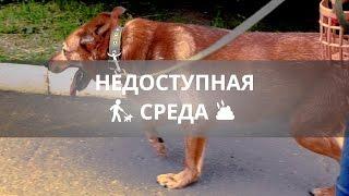 Недоступная среда: возможен ли цивилизованный выгул собак в Ижевске