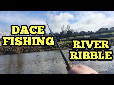 DACE FISHING ON STICK FLOAT ON THE RIVER RIBBLE PRESTON