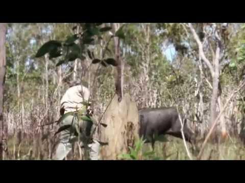 Relentless Pursuit - Cape Water Buffalo