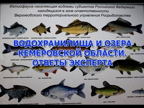 бесплатные знакомства кемеровской области