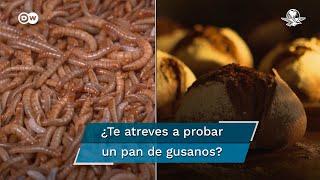 La Unión Europea dio luz verde al consumo de gusanos de la harina. Las granjas de insectos e incluso algunas panaderías aprovechan la ocasión  #DW    #PanDeGusanos