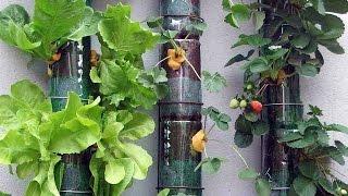Используйте пластиковые бутылки в огороде! Поделки для дачи
