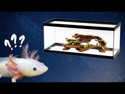 New Axolotl Checklist – What Do I Need For My New Axolotl?
