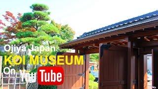 Koi museum Ojiya Japan  Nishikigoi