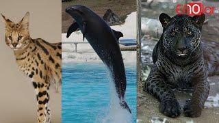 İki Farklı <b>Hayvanın Çiftleşmesi</b> İle Ortaya Çıkan İnanamayacağınız ...