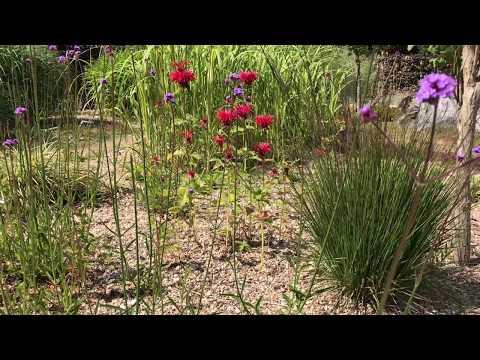 Täckmaterial för lättskött trädgård med perenner från Bangsbo Botaniske Have i Fredrikshamn Danmark