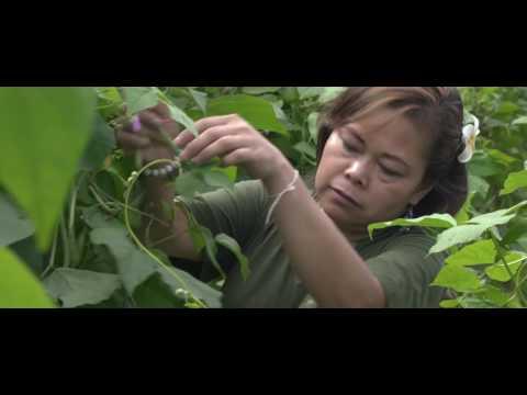 Lao Food Movement - Chef Seng Around Laos