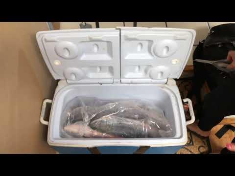 Salmon Fishing Trip To Westport Washington