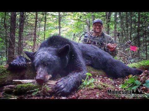 Archery Minnesota Black Bear